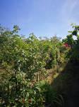 hodgepodge garden