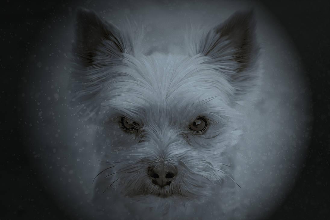 a cute little dog in a big life