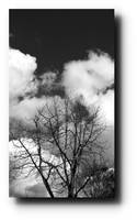 trees and clouds dreams