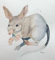 Bilby Watercolour