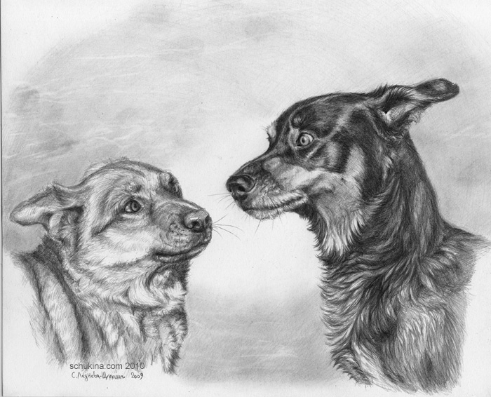 Dogs emotions by sschukina