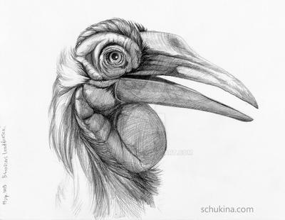 Southern Ground Hornbill by sschukina