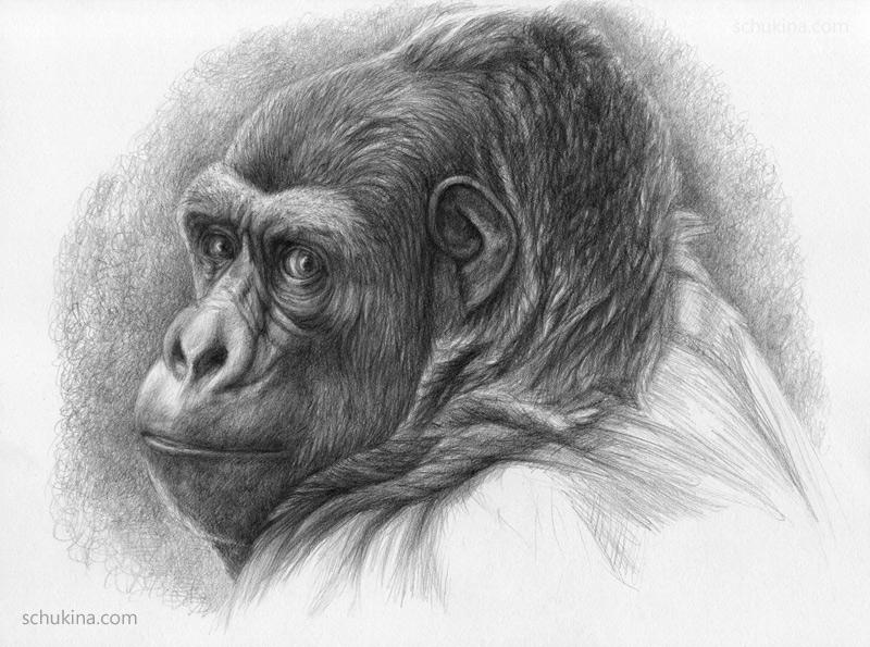 Gorilla by sschukina