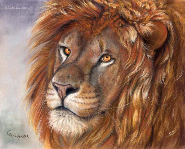 Lion - soft pastel by sschukina