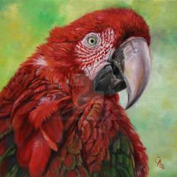 Red ara chloropterus - macaw by sschukina