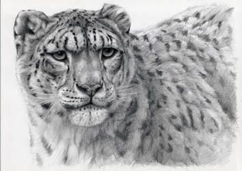 Snow Leopard portrayal