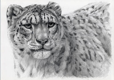 Snow Leopard portrayal by sschukina