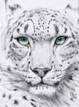 ACEO Snow Leopard