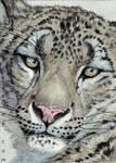 ACEO Snow Leopard...