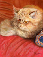 Persian Cat by sschukina