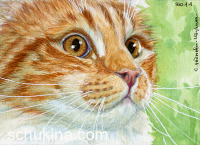 ACEO Young Ginger Cat by sschukina