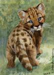 ACEO Cougar Cub