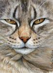 ACEO Tabby cat - Sleepy Glance