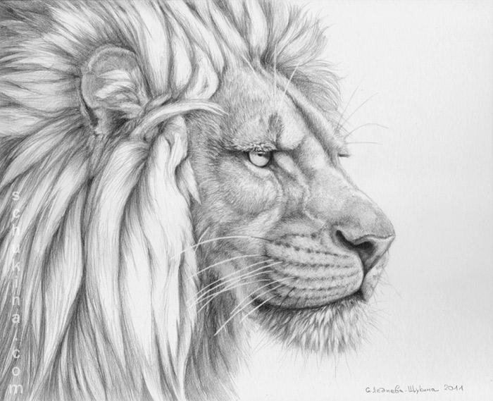 African Big Cats Portraits