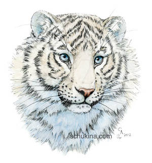 Young White Tiger
