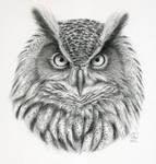 Bubo bubo - owl portrait