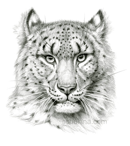 """Saatchi Art Artist Varjavan Dastoor; Drawing, """"Snow Leopard"""" #art ..."""