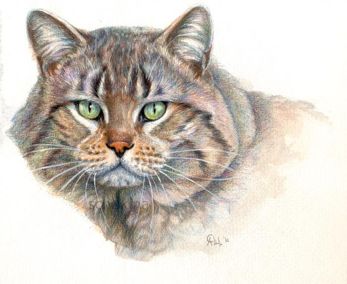 Street Cat Portrait by sschukina