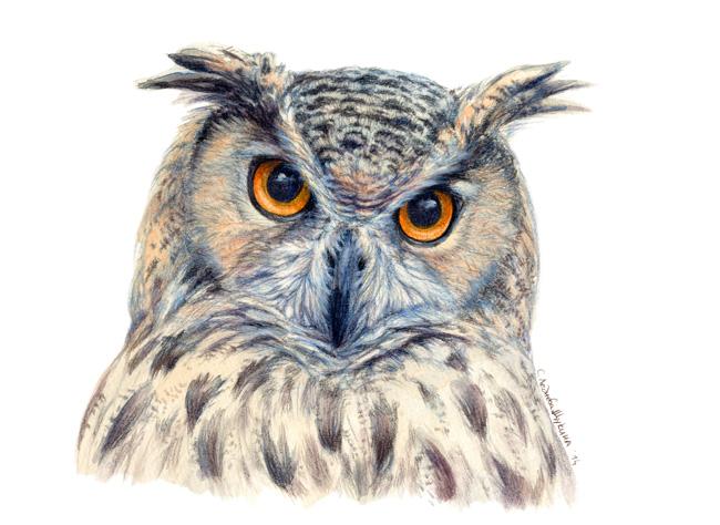 Eurasian Eagle Owl CC14-04 by sschukina