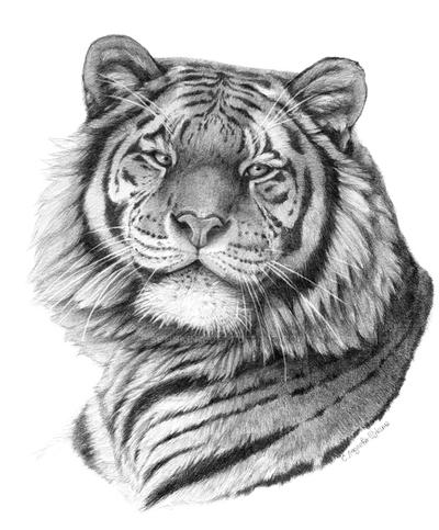 Siberian Tiger portriat G101 by sschukina