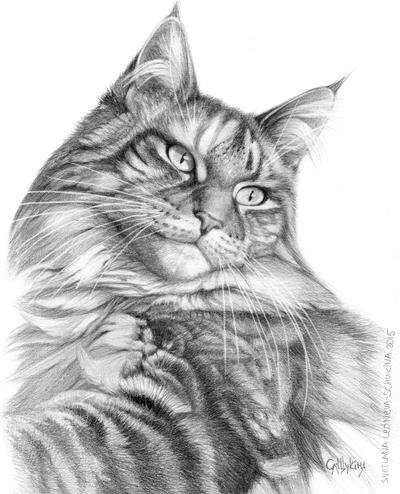 Maine Coon Cat portrait G113 by sschukina
