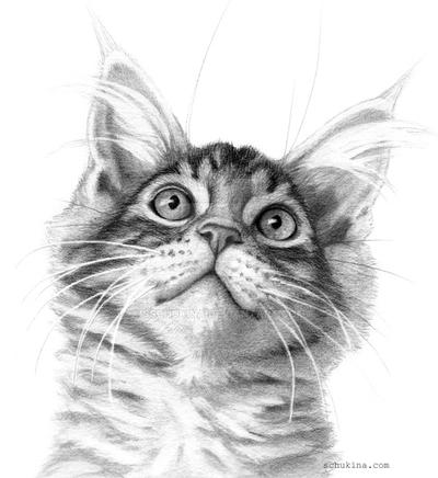 Kitten looking up G115 by sschukina