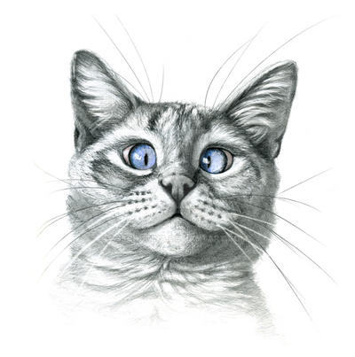 Cross Eyed cat G122 by sschukina