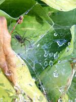 Spider's Web by Aprettyhatemachine