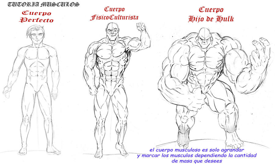 tutoria de musculos by vengansher on DeviantArt