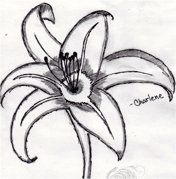 Lily Flower Picture on Tiger Lily By  Koalaherpes On Deviantart