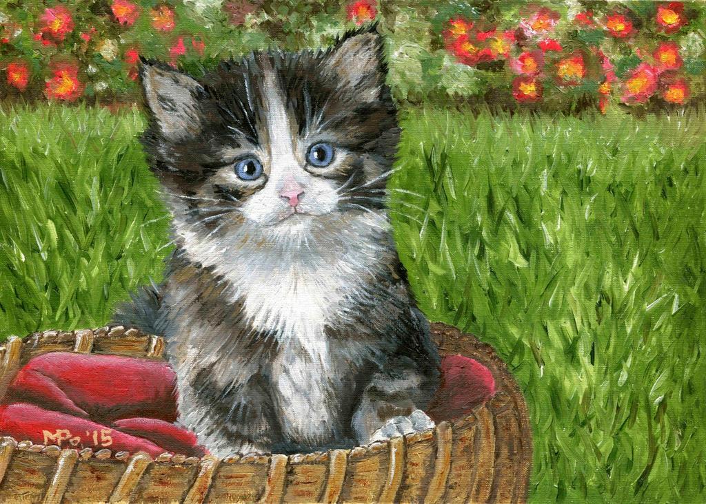 Kitten Site Cats Org Uk