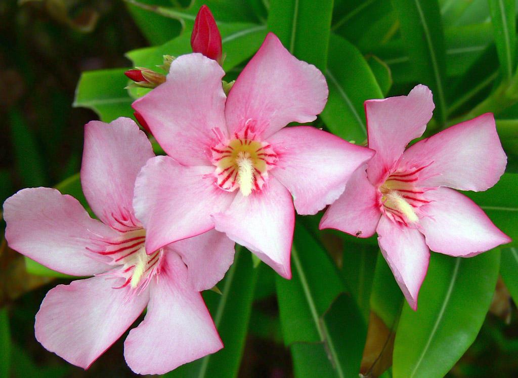 Caribbean Flowers: Caribbean Flowers 62 By Aurora900 On DeviantArt