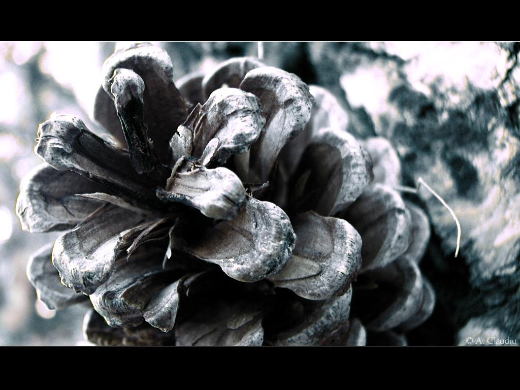 Frozen by SorrowBlade