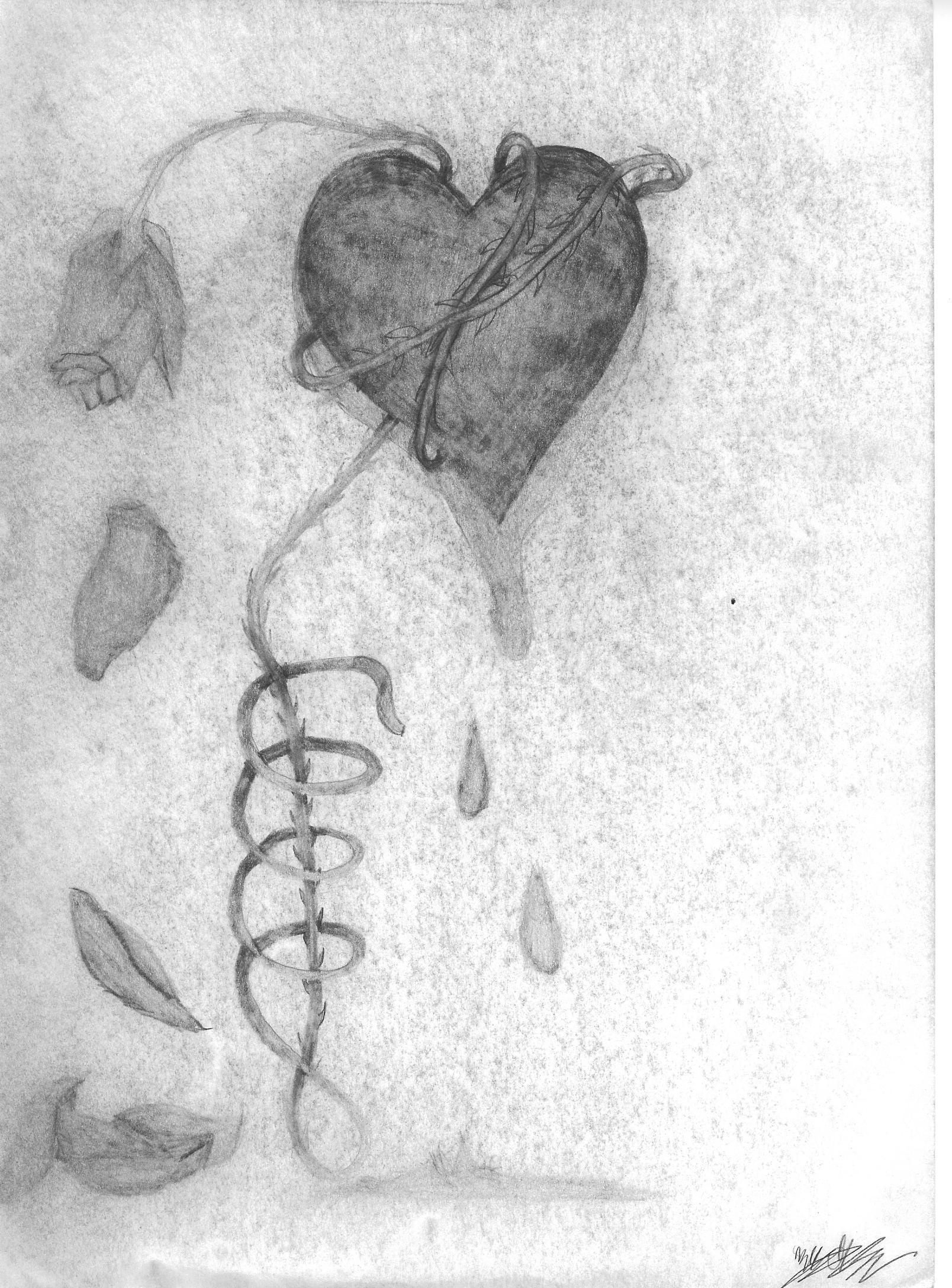 Bleeding Heart Sketch Bleeding Heart of Thorns