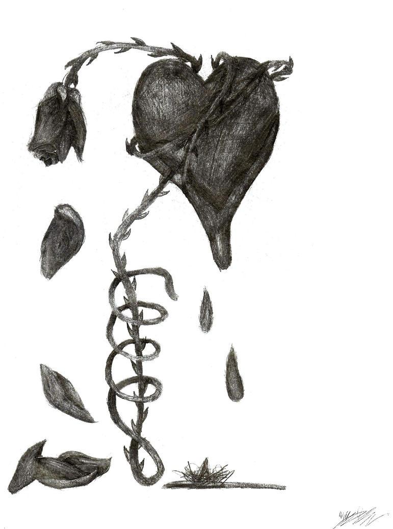Bleeding Heart Sketch Bleeding Heart of Thorns Shade