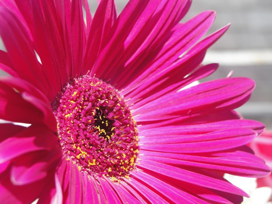Big pink flower by elphabathropp14 on deviantart big pink flower by elphabathropp14 mightylinksfo