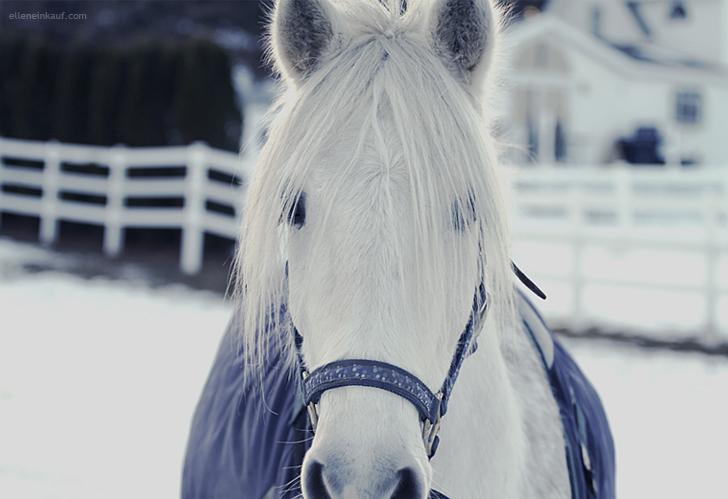 Knight Snow by EllenEinkauf