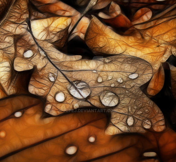 leaf by pepej