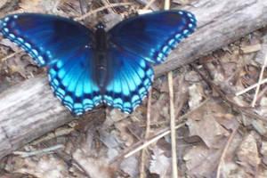Butterfly by PaintedandUseless