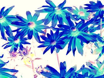 Blue flowers by hyyli
