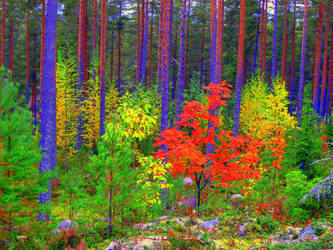 Fall colors by hyyli