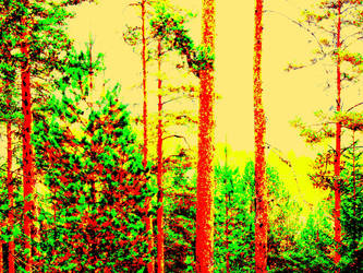 Sunny forest by hyyli