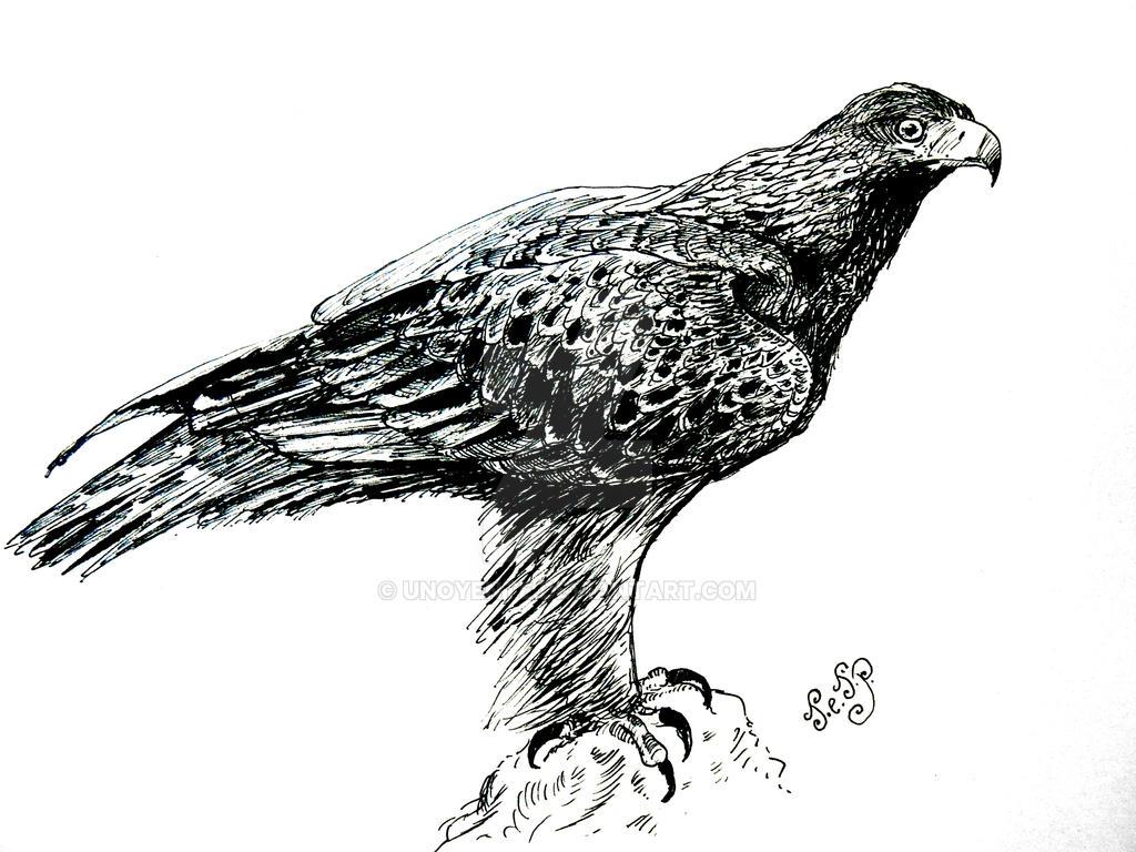 Golden Eagle... by Unoyente