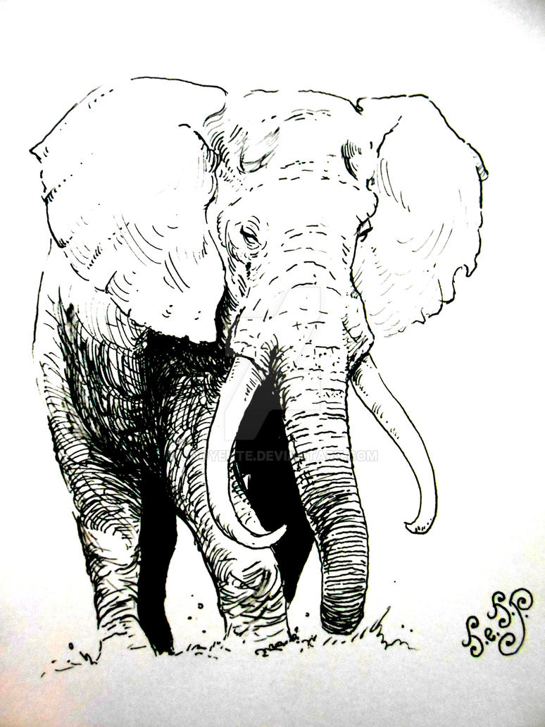 Elephant Sketch... by Unoyente