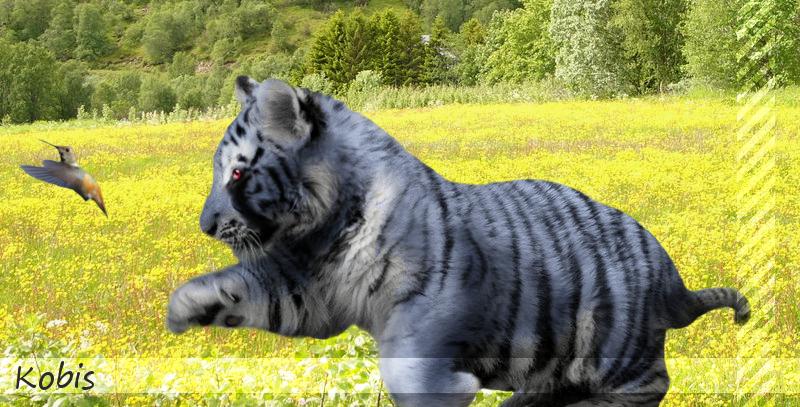 Kobis as a Cub :: Photomanip by Perocore on deviantART