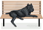 Ardesh on A Bench
