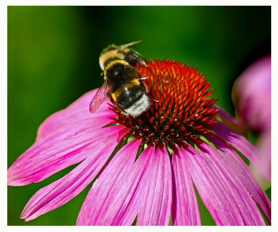 bee kiss by bracketting94 on deviantART