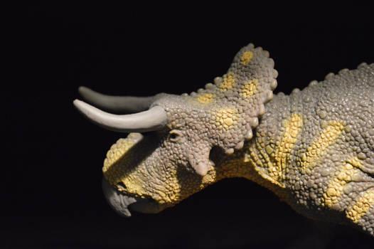 Safari Nasutoceratops