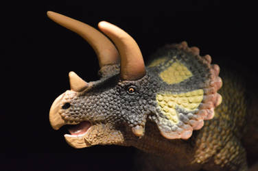 Safari Triceratops