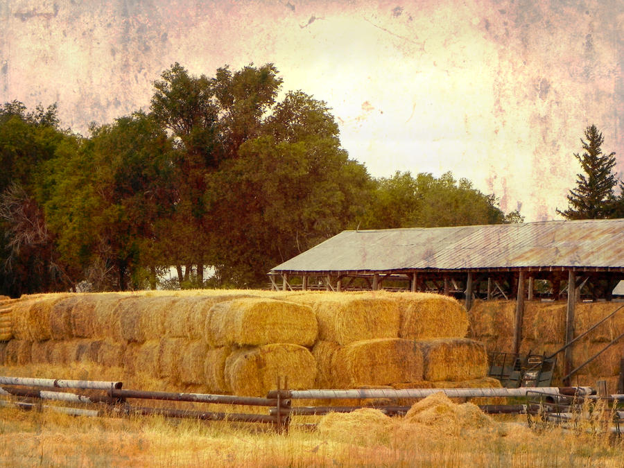Hay Bales by fe208